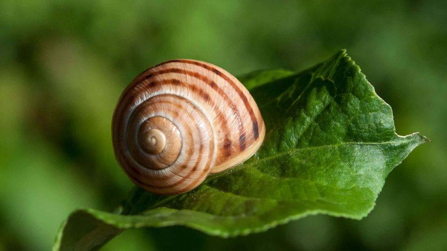 Spirale d'escargot