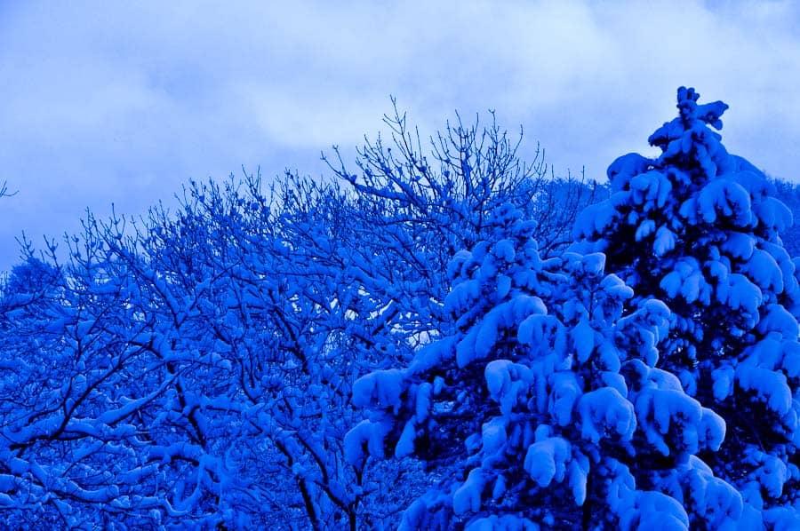 neige-genolier
