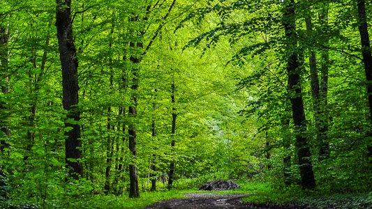 La forêt - printemps 2013