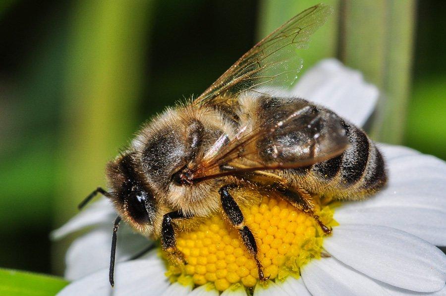 abeilles-7