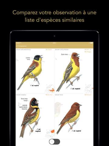 Le Guide Ornitho pour iPad