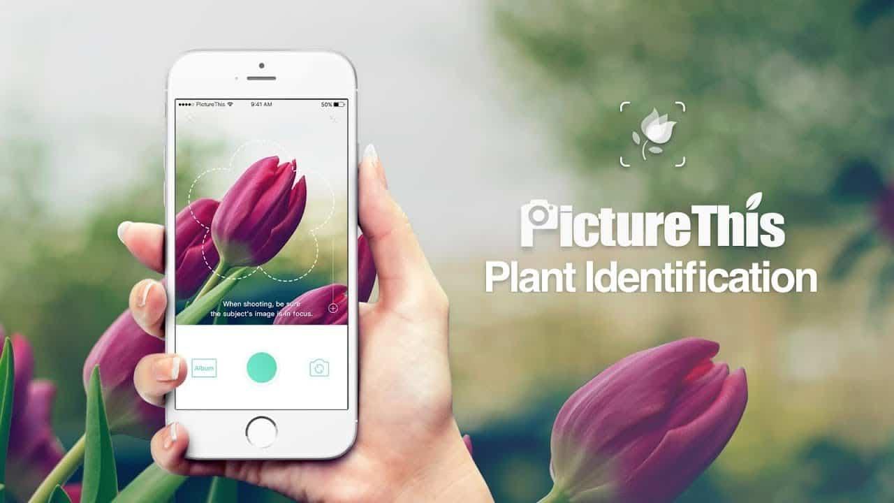 Application PictureThis