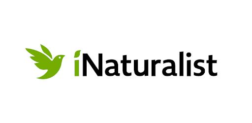iNaturalist, l'application